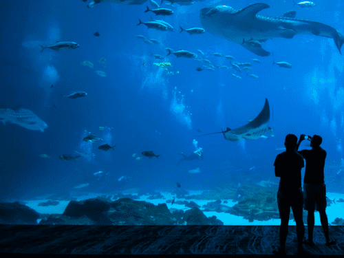 Galway daily news Galway Aquarium leading effort to foster an 'Ocean Literate' generation