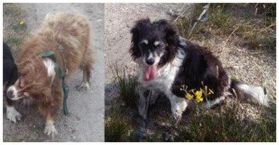 Galway News - Two dogs missing in Galway
