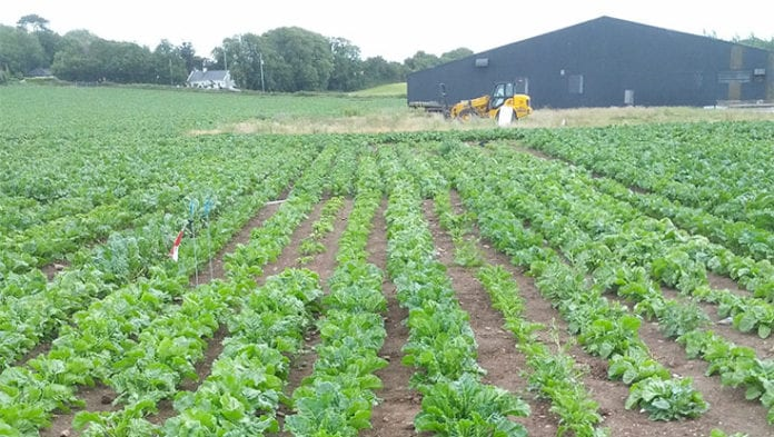 galway daily news NUIG researchers develop genetic breeding strategies for beets