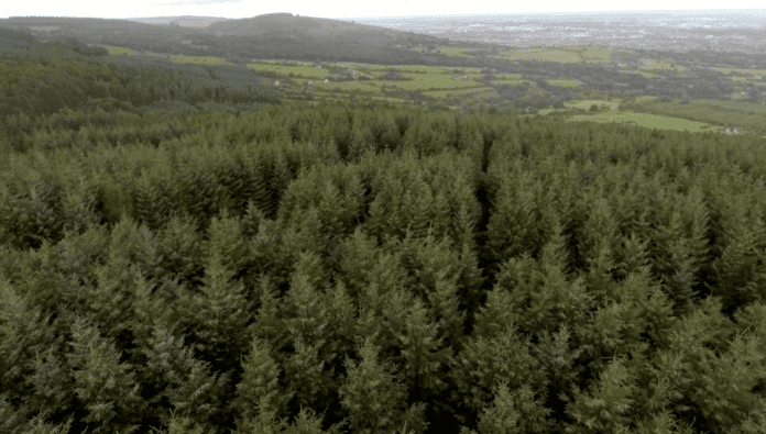 Galway daily news fears that forestry overwhelming the West of Ireland