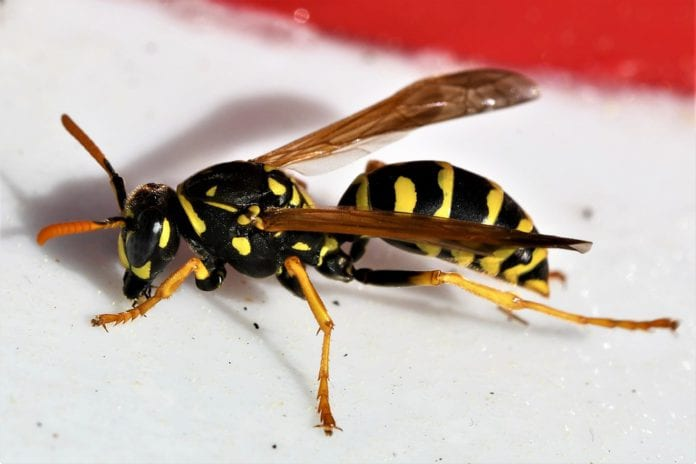 news galway wasps most-infected