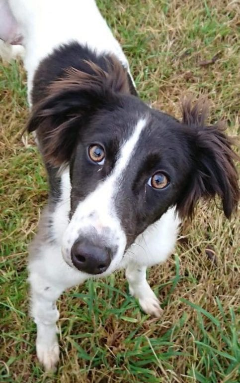 Galway News - Features - Astonishing recovery of puppy with horrific injuries