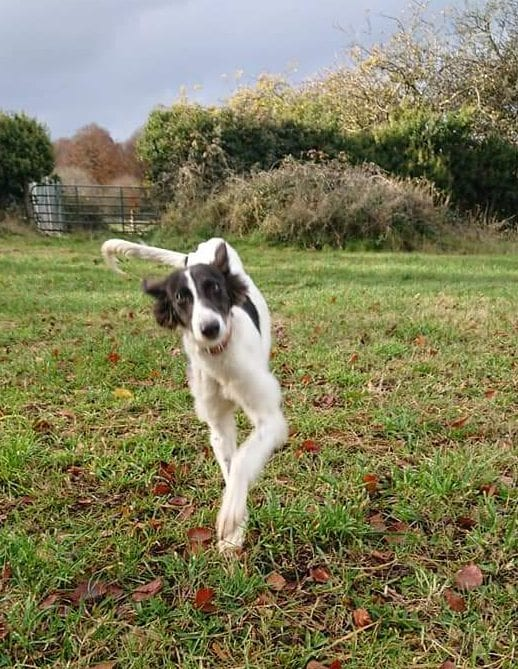 Asna running