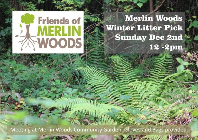 Galway News - What's On - Free yoga class at Friends of Merlin Woods Big Litter Pick