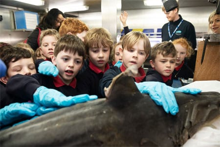 Galway Daily news Barna students get up close and personal with sharks aboard the Celtic Explorer