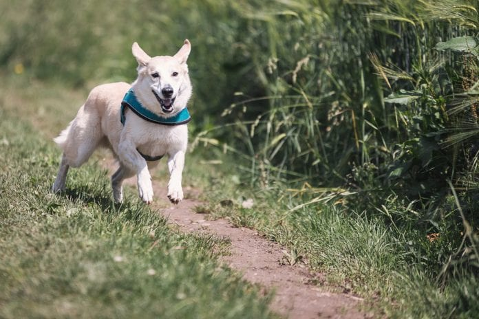 Galway Daily news Athenry dog park permission upheld