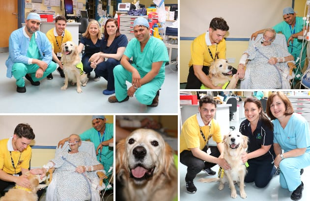 Galway Daily life & style Therapy Dog Cody makes his debut at Portiuncula Hospital