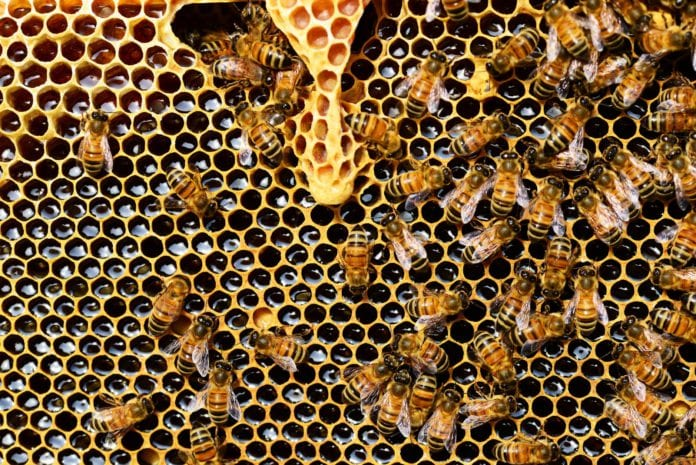 Galwy Daily life & style Honey Fair & Show showing the sweet success of beekeeping