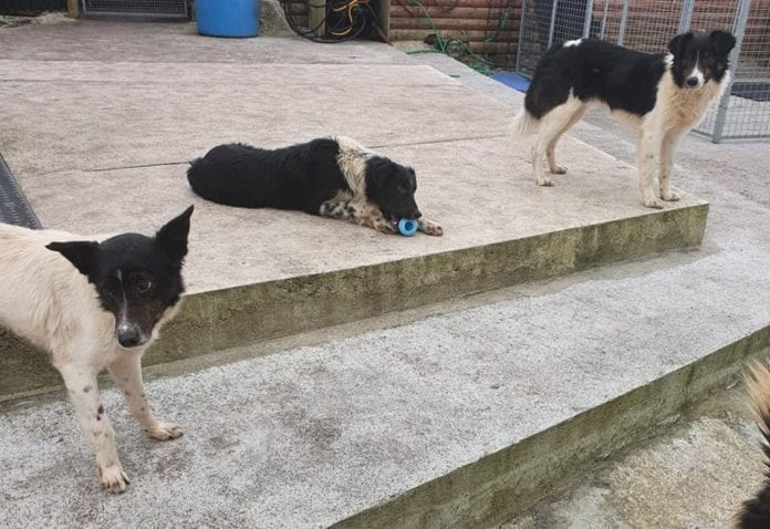 Galway Daily news MADRA rescues 34 dogs from county farm, seeks good homes