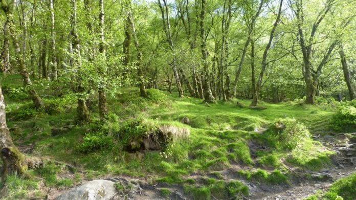 coillte forest galway daily