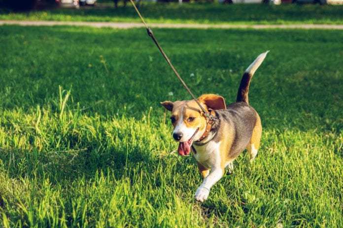 Galway Daily news City Council reminds dog owners to clean up after their pets
