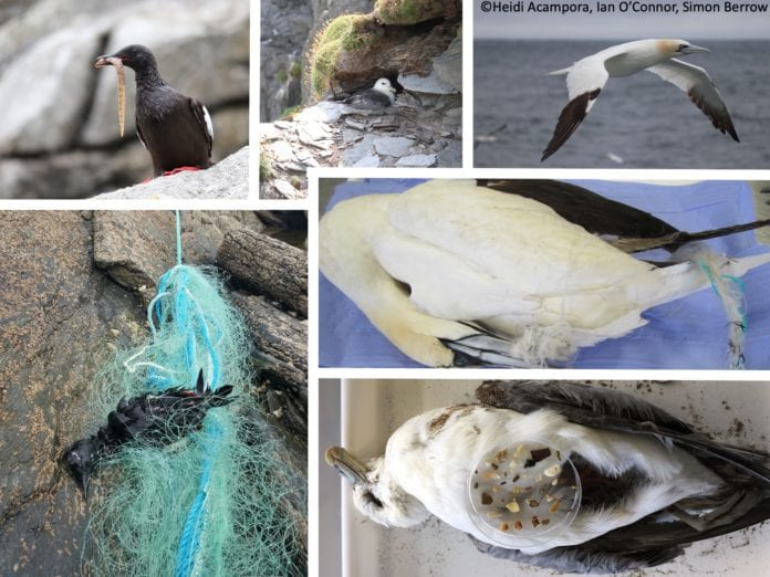 Galway Daily news Pollution and stuffed birds - ethical taxidermy in marine science