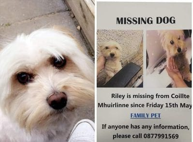 galway daily news missing dog