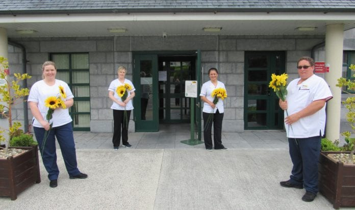 galway daily sunflower appeal