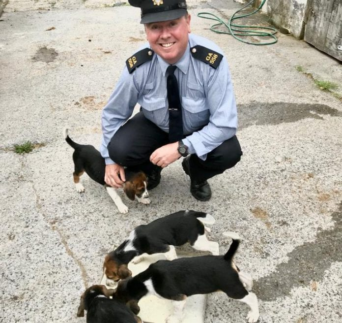 Galway Daily news Litter of puppies stolen from Craughwell recovered safely in Belfast