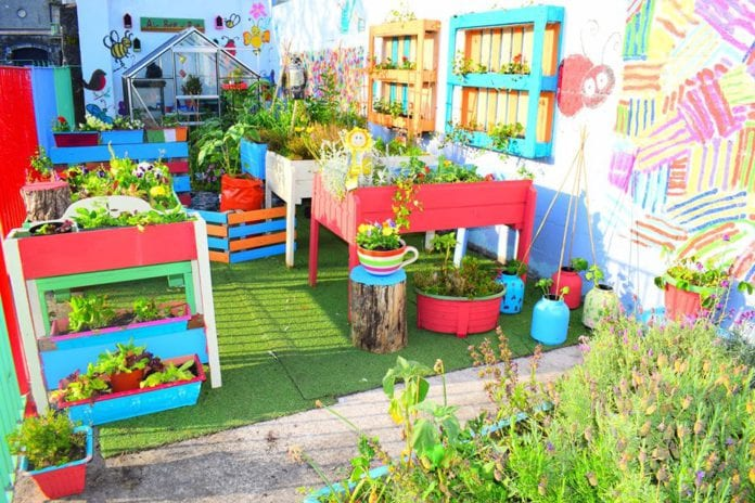 galway daily big grow competition st patricks healthy food award