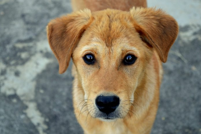 Galway Daily news increase in dogs missing or stolen in Galway