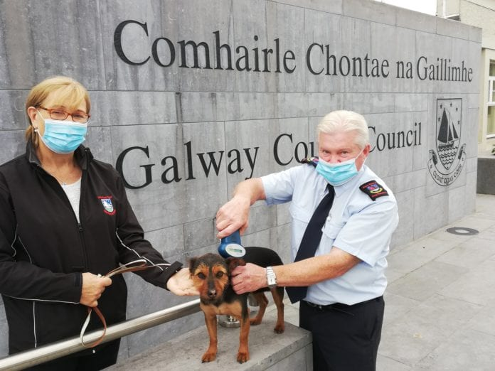 County Council issues fresh warning after increase in dog thefts