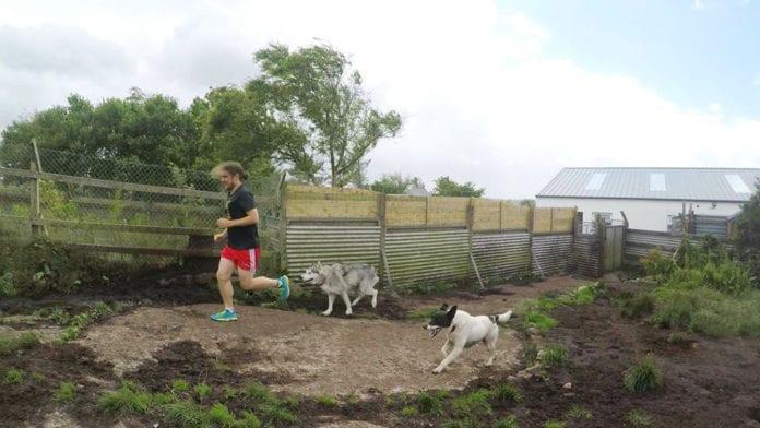 galway daily madra dog rescue charity marathon run owen hanley
