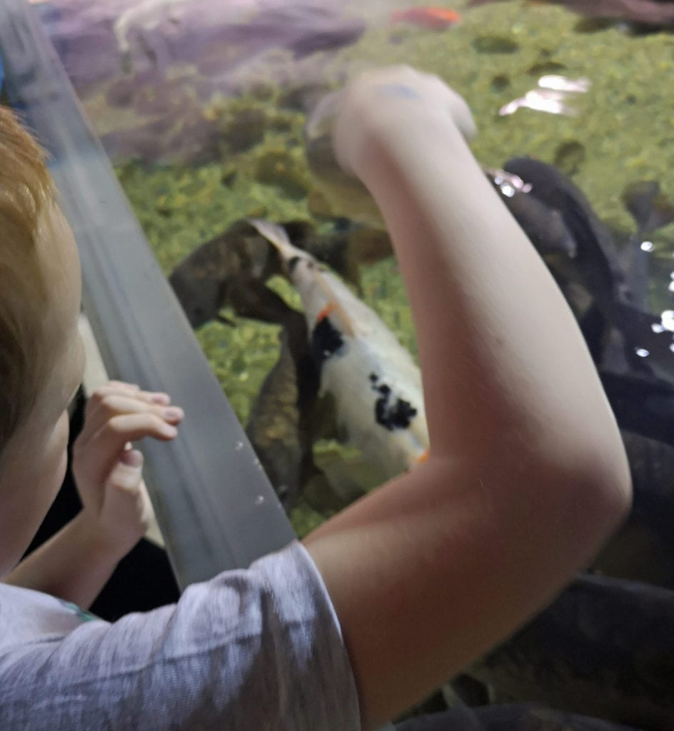 Discover the Ocean your way with Galway Aquarium