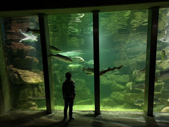 Galway Daily education Discover the Ocean your way with Galway Aquarium
