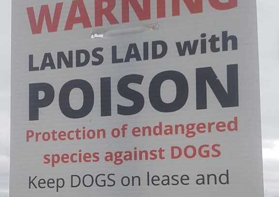 galway daily news dogs on leash poster sign bogus