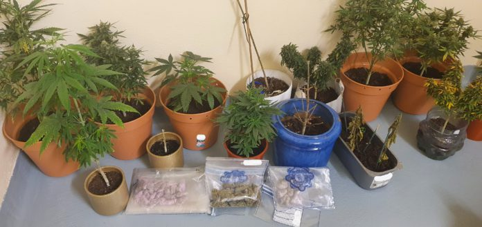 Galway Daly news Gardaí seize €12,000 in cannabis plants and herb in Oranmore