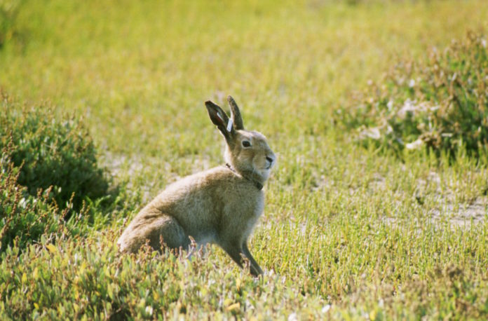 Galway Daily news Call for Galway TDs to back proposed ban on hare coursing