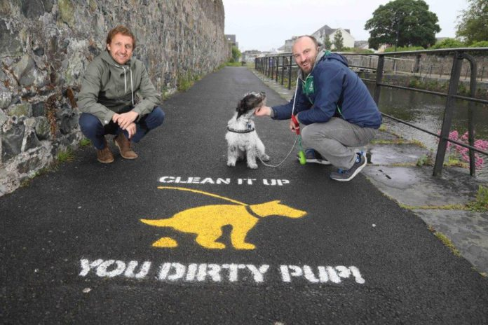 galway daily news clean it up pup dog